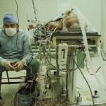 καρδιοχειρουργος