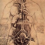 The_Principle_Organs_and_Vascular_and_Urino-Genital_Systems_of_a_Woman